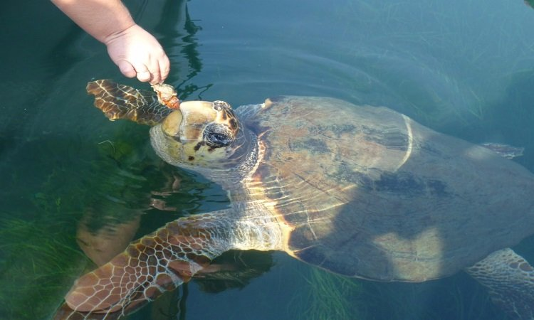 Marmaris Turtle Beach Dalyan