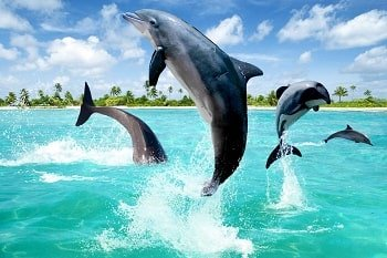 Meet with Dolphins in Marmaris